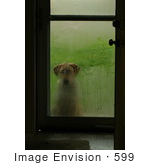 #599 Picture Of A Dog Waiting At The Front Door