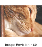 #60 Pet Picture Of A Cat Leaning Against Wood