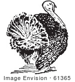 #61365 Retro Clipart Of A Vintage Thanksgiving Turkey Bird Rear View In Black And White - Royalty Free Vector Illustration