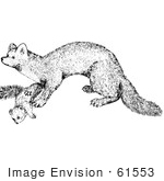 #61553 Clipart Of A Marten In Black And White - Royalty Free Vector Illustration