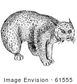 #61555 Clipart Of A Bobcat In Black And White - Royalty Free Vector Illustration