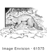 #61575 Clipart Of A Marten In Black And White - Royalty Free Vector Illustration