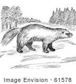 #61578 Clipart Of A Wolverine In A Meadow In Black And White - Royalty Free Vector Illustration