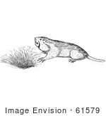 #61579 Clipart Of A Pocket Gopher By A Den In Black And White - Royalty Free Vector Illustration
