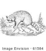 #61584 Clipart Of A Raccoon On A Shore In Black And White - Royalty Free Vector Illustration