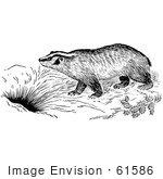 #61586 Clipart Of A Badger By A Den In Black And White - Royalty Free Vector Illustration