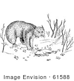 #61588 Clipart Of A Bobcat With Rabbit As Prey In Black And White - Royalty Free Vector Illustration
