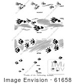 #61658 Clipart Of Tracks Of Furbearing Animals In Black And White - Royalty Free Vector Illustration
