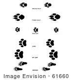 #61660 Clipart Of Wolf Wildcat And Raccoon Tracks In Black And White - Royalty Free Vector Illustration by JVPD