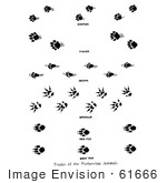 #61666 Clipart Of Marten Fisher Skunk Opossum And Fox Tracks In Black And White - Royalty Free Vector Illustration