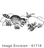 #61718 Clipart Of A Raccoon And Chipmunk In Black And White - Royalty Free Vector Illustration