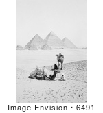 #6491 Camels And Men Near The Pyramids Of Giza