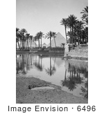 #6496 Native Village Palm Trees And Egyptian Pyramids