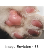 #66 Picture Of A Cat Paw