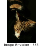 #663 Picture of an Orange Cat Sitting in the Sun by Kenny Adams