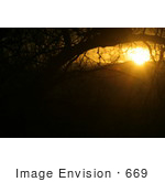 #669 Picture of an Orange Sunset Through Trees by Kenny Adams