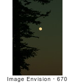 #670 Picture Of A Full Moon In The Night Sky With An Evergreen Tree