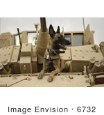 #6732 Military German Shepherd by JVPD