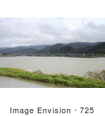 #725 Photograph Of A Feral Cat And The Patterson Bridge Gold Beach