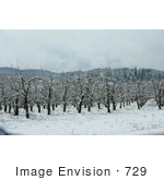 #729 Image Of A Pear Orchard In Snow Jacksonville Oregon