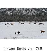 #765 Image of Cattle in Snow, Bishop Creek, Ruch, Oregon by Jamie Voetsch
