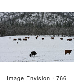 #766 Image of Cattle in Snow, Bishop Creek, Ruch, Oregon by Jamie Voetsch