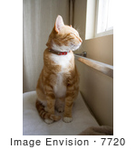 #7720 Image Of An Orange Cat Near A Window
