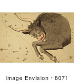 #8071 Picture of Taurus Constellation by JVPD