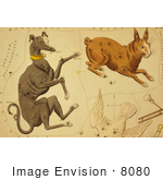 #8080 Picture of Constellations of Dog, Rabbit, Dove by JVPD