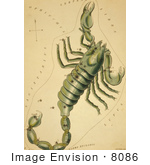 #8086 Picture Of Scorpio Constellation