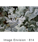 #814 Image of a Leafy Plant by Jamie Voetsch