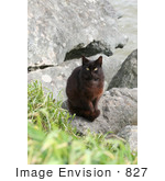 #827 Photography of a Brownish Black Stray Cat by Kenny Adams
