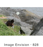 #828 Photography Of A Brownish Black Cat Sitting On A Jetty