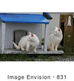 #831 Photography Of Focused Feral Cats