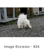 #834 Photography Of Feral Kittens Playing