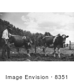 #8351 Picture Of A Veterinarian With Cows