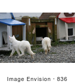 #836 Photography Of Stray Cats Going Separate Ways