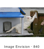 #840 Photo of a Feral Cat Scratching a Post by Kenny Adams