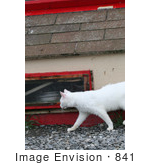 #841 Photo Of A Feral Cat Walking