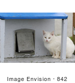 #842 Photo Of A White Feral Cat Sitting Beside A Cat Door