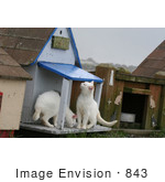 #843 Photography Of Two Feral Kittens Smelling A Cat House