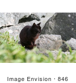 #846 Photography Of A Brownish Black Cat Sitting On Boulders Along The Ocean
