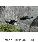 #848 Photo Of A Stray Brownish Black Cat Behind A Rock