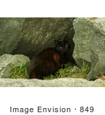 #849 Photography Of A Scared Feral Cat
