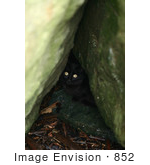 #852 Photo Of A Stray Black Cat Hiding In Rocks