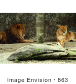 #863 Photo of a Male and Female Lion by Kenny Adams