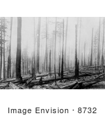 #8732 Picture Of A Forest Fire Aftermath