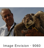 #9060 Picture Of A Lanner Falcon