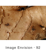 #92 Picture Of A Ginger Root