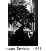 #941 Black And White Picture Of A Cat Sleeping Beside A Plant